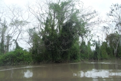 Regenwald Pucallpa Februar 2010